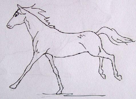 通常慢画里的动物很简单